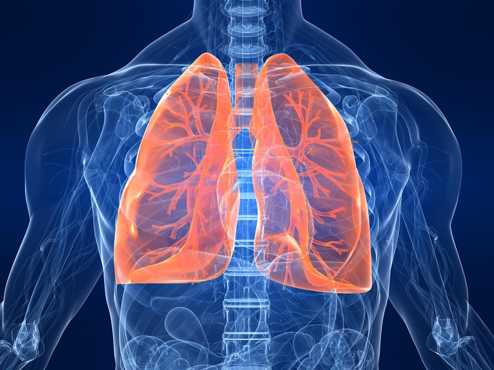 cartoon x-ray diagram of lungs within the human body